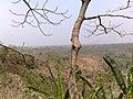 Sonnashi Hill, Chittagong.jpg