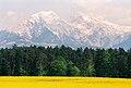 SorskoPolje-KocnaGrintovec1.jpg