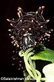 Southern Birdwing 2011 06 30 6847 balakrishnan valappil (6022255093).jpg