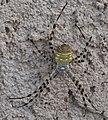 Spider (7991970422).jpg