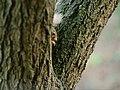 Spot the Squirrel.jpg