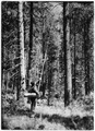 Spraying tree to 30 feet by using a long extension - NARA - 286076.tif
