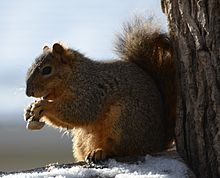 9. Squirrel