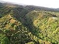 Starr-141014-2227-Caesalpinia decapetala-aerial view-Kakipi Gulch Haiku-Maui (25128997492).jpg