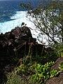 Starr 050315-5213 Cyperus phleoides.jpg