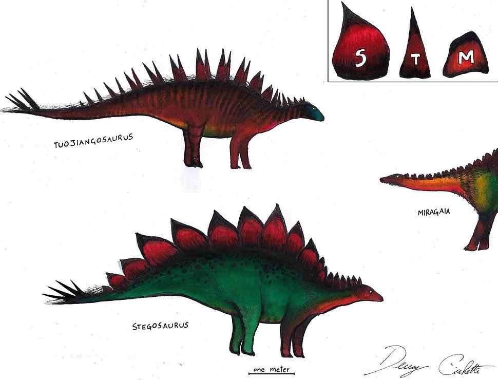 Stegosauridae Trinity