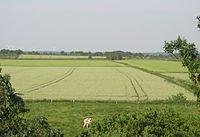Stelle wittenwurth getreidefelder.jpg