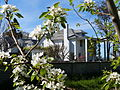 Stewart-Voorhies House with pear blossoms - Medford Oregon.jpg