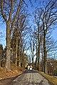 Stieleichenallee Langauer Straße Litschau 2014-02 01 NÖ-Naturdenkmal GD-127.jpg