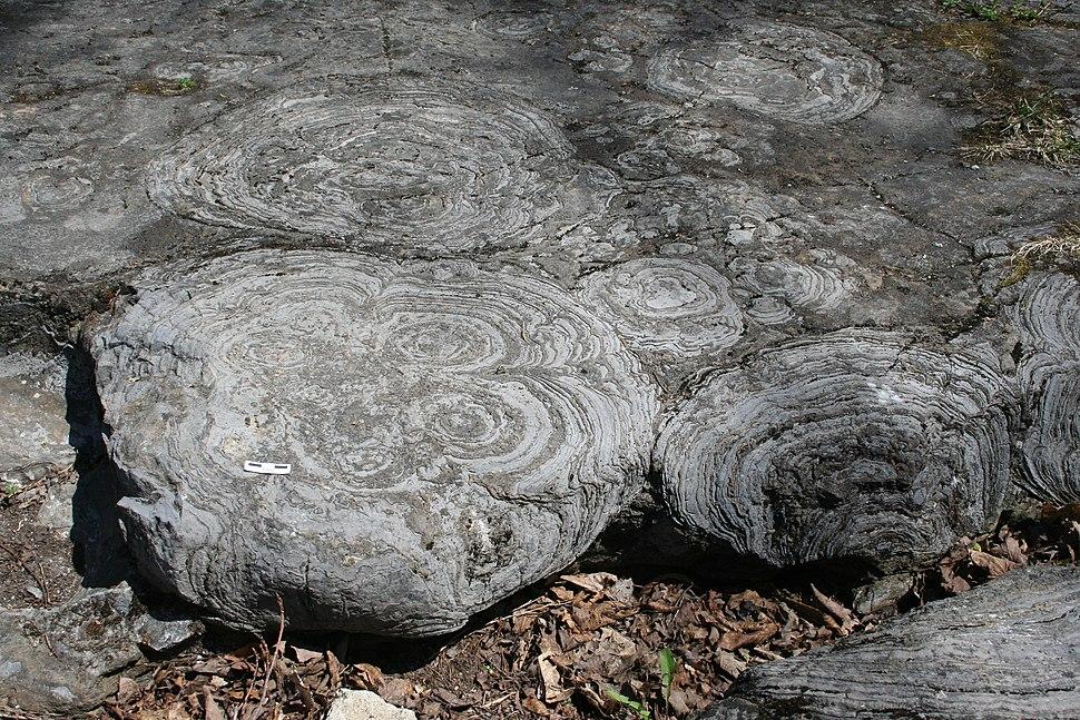 Stromatolites hoyt mcr1
