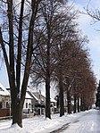 Suchdol - stromořadí lip srdčitých v Gagarinově ulici na Budovci (17).jpg