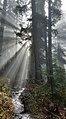 Sunrays on the Pacific Crest Trail.jpg