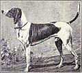 Swiss Hound from 1915.JPG