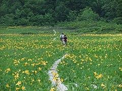 Taanwasiro Situgen.jpg