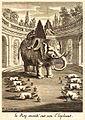 Tachard-elephant-2.jpg