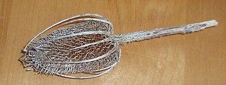 Dipsacus - Dried teasel flower head, used to raise the nap on cloth