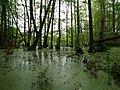 Teufelsbruch swamp at the Bäckerfurt in summer 4.jpg