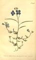 The Botanical Magazine, Plate 496 (Volume 14, 1800).png