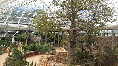 How to get to Kirstenbosch with public transport- About the place