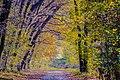 The Golden Light Of Autumn Forest (127228175).jpeg