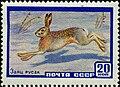 The Soviet Union 1960 CPA 2403 stamp (European Hare).jpg