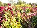 The TNU Botanical Garden in Simferopol, Crimea, Ukraine 09.JPG