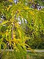 The TNU Botanical Garden in Simferopol, Crimea, Ukraine 30.JPG