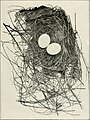 The bird, its form and function (1906) (14569380937).jpg