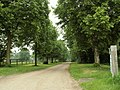 The driveway to Longstowe Hall - geograph.org.uk - 459819.jpg