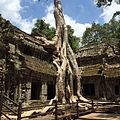 The famous tree growing in the Ta Prohm temple ruins,Siem Reap,Cambodia - panoramio.jpg