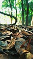 The forbidden forest floor (Pobitora Wildlife Sanctuary, Assam).jpg