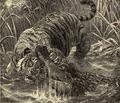 Tigermugger.png