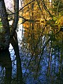 To Many Trees In This Reflection - panoramio.jpg