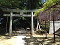 Torii of Takeuchi Shrine and pergola of wisteria floribunda in Kashii Shrine.JPG