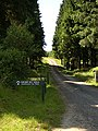 Track in Kielder Forest - geograph.org.uk - 204584.jpg