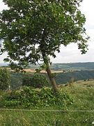 Tree-IMG 6916.JPG