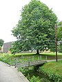 Tree and footbridge, Ross-on-Wye - geograph.org.uk - 1399199.jpg