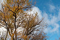 Trees fall colors 2742.jpg