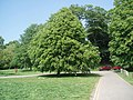 Trees in Preston Park - geograph.org.uk - 1317606.jpg