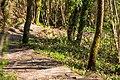 Treppen durch den Wald von der Kalleehöhe Richtung Sudhaus in Tübingen.jpg