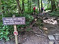 Trillium Gap Trail - panoramio.jpg