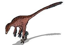 Troodon formosus (feathers).JPG