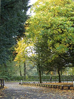 Turning leaves at Haigh Hall - geograph.org.uk - 1022387
