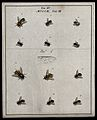 Twelve flies (Muscæ species). Coloured etching by M. Harris, Wellcome V0022481EL.jpg