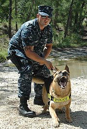 US Navy 100625-N-8593M-001 Master-at-Arms 2nd Class Matthew DuPont trains with his military working dog during an exercise at Naval Air Station Key West