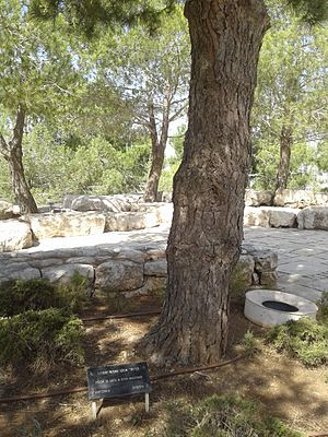 """Uku Masing - Uku and Eha Masing's tree, planted by Yad Vashem in recognition of the Masings being """"Righteous Among the Nations."""""""