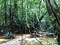 Une balade à Saül, parc amazonien de Guyane.jpg