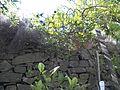 Une vue du jardin L'Hardy-Denonain à Gassin.jpg