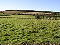 Upper Tirkane - geograph.org.uk - 587299.jpg