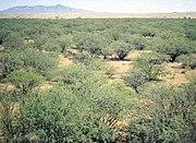 Valle de Sonora